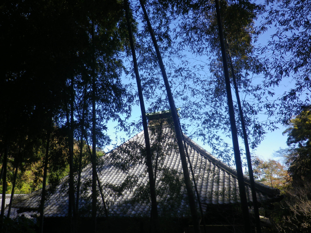 03)    17.11.25 初冬の鎌倉「光則寺」