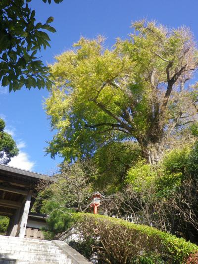 01)    17.11.24 初冬の 鎌倉「荏柄天神社」