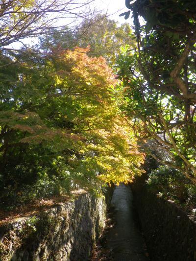 17.11.24 鎌倉 ' 二階堂川 ' に架かる橋から