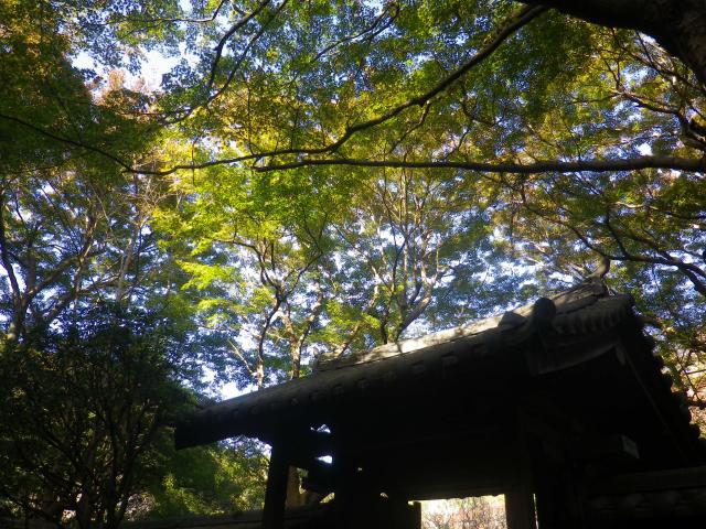 08-1)    17.11.24 初冬の 鎌倉「瑞泉寺」