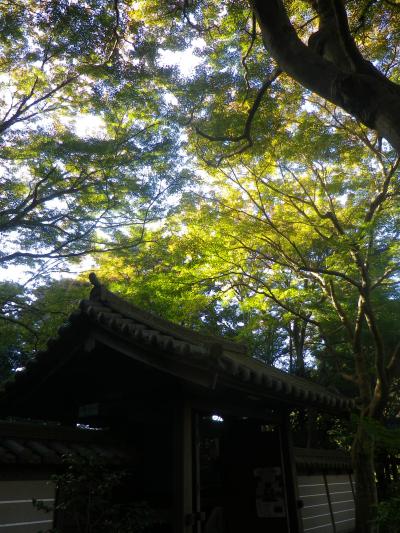 08-2)    17.11.24 初冬の 鎌倉「瑞泉寺」