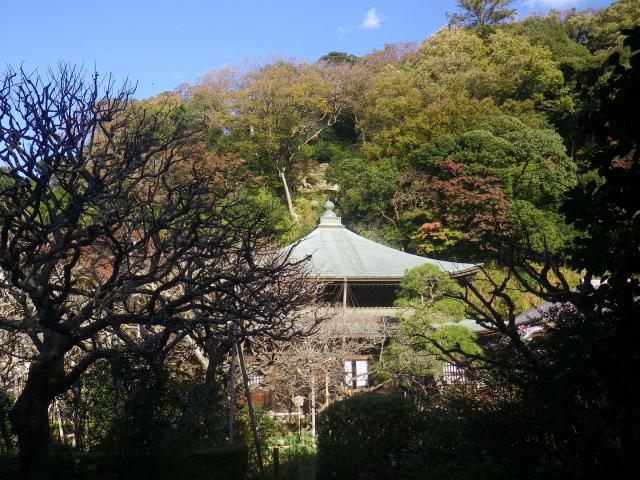 10)    17.11.24 初冬の 鎌倉「瑞泉寺」