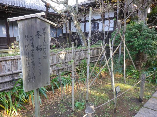 16-1)    17.11.24 初冬の 鎌倉「瑞泉寺」