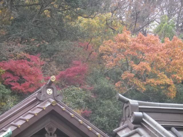 08)   17.11.30 鎌倉「英勝寺」塀の外から紅葉狩り