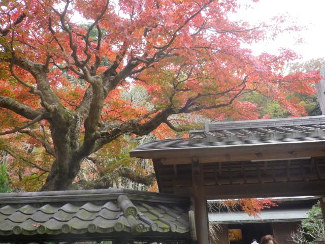 05-2()  17.11.30 鎌倉「東慶寺」紅葉の頃