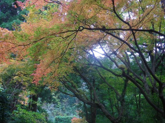 08-2)   17.11.30 鎌倉「寿福寺」 紅葉の頃