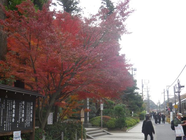 03) 総門の手前から 17.11.30 紅葉の頃 鎌倉「円覚寺」 / 塔頭