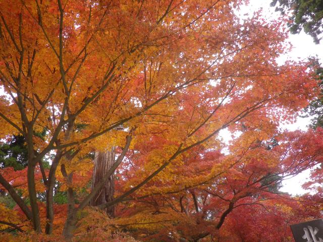 04-3) 総門前の階段周辺 17.11.30 紅葉の頃 鎌倉「円覚寺」 / 塔頭