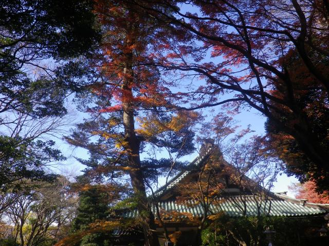 B03)  本堂周辺   17.12.06 鎌倉「妙本寺」紅葉の頃