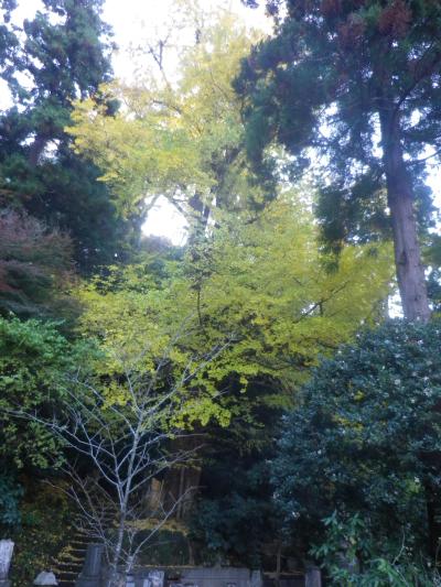 E01) 比企一族墓所周辺   17.12.06 鎌倉「妙本寺」紅葉の頃
