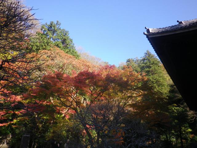 F03) 祖師堂周辺 _ 左側   17.12.06 鎌倉「妙本寺」紅葉の頃