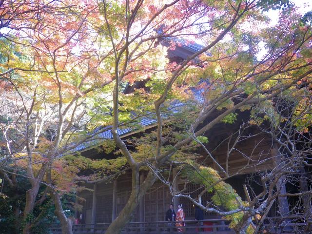 F04) 祖師堂周辺 _ 左側   17.12.06 鎌倉「妙本寺」紅葉の頃
