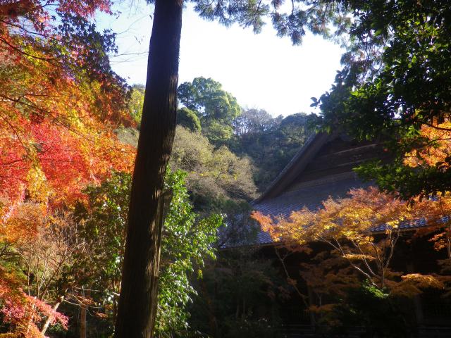 G01) 墓地参道から祖師堂方向   17.12.06 鎌倉「妙本寺」紅葉の頃