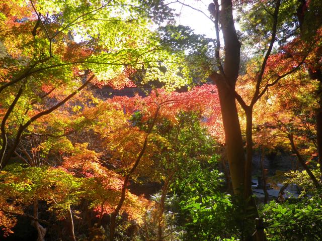 G02)  祇園山ハイキングコース登り口から祖師堂左の池方向  17.12.06 鎌倉「妙本寺」紅葉の頃