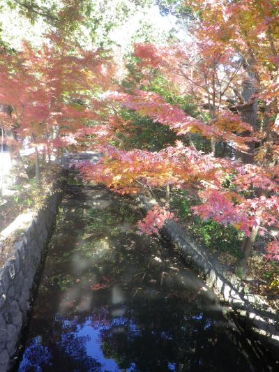 A01)    「白旗神社」参道 ( = 鎌倉国宝館前)     17.12.06 鎌倉「鶴岡八幡宮」銀杏が散って赤い葉が映える頃