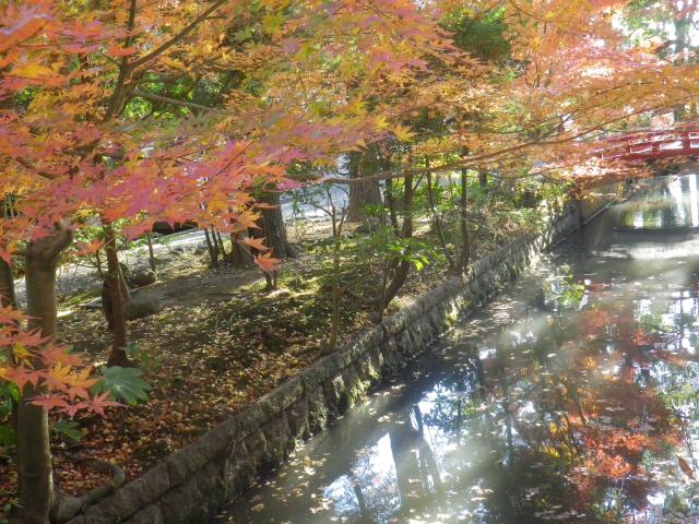 A03)    「白旗神社」参道 ( = 鎌倉国宝館前)   17.12.06 鎌倉「鶴岡八幡宮」銀杏が散って赤い葉が映える頃