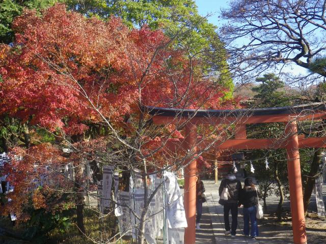 C12)    旗上弁財天社   17.12.06 鎌倉「鶴岡八幡宮」銀杏が散って赤い葉が映える頃