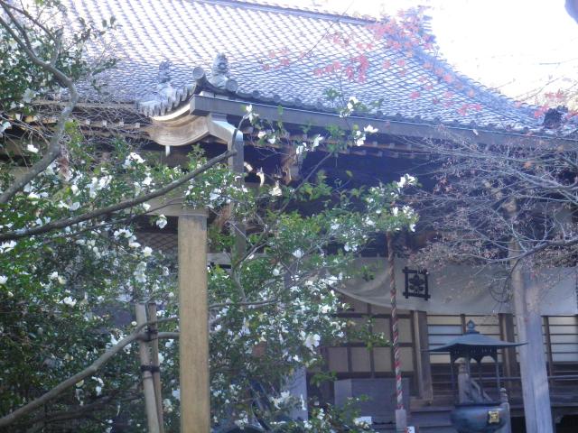 05-1)   17.12.12 鎌倉「安国論寺」今日は富士山が見えたヨ