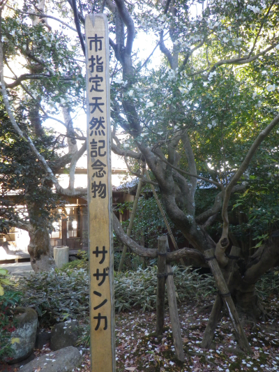 05-2)   17.12.12 鎌倉「安国論寺」今日は富士山が見えたヨ