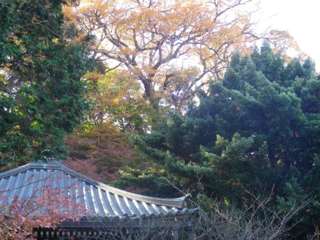 06-3)   17.12.12 鎌倉「安国論寺」今日は富士山が見えたヨ