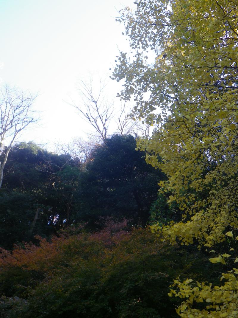 10-2)   17.12.12 鎌倉「安国論寺」今日は富士山が見えたヨ