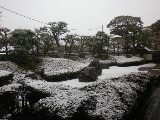 08-1)    18.03.21 雪が降る春彼岸中日の鎌倉「光明寺」開花開始直前!桜の蕾