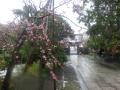 03-1)    18.03.21 鎌倉「長勝寺」桜の開花寸前に雪が降った春彼岸の中日