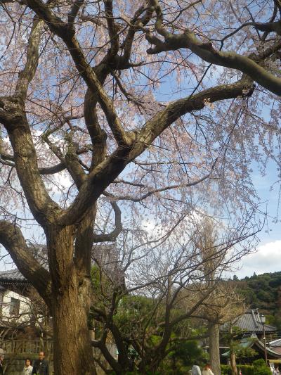 04-1)      18.03.24 鎌倉「本覚寺」の枝垂れ桜