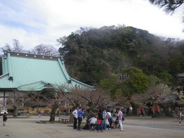 07)    18.03.24 鎌倉「光明寺」の桜が開花