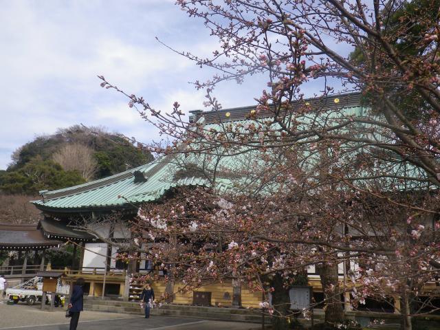 10)   18.03.24 鎌倉「光明寺」の桜が開花
