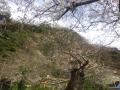 02-1)    18.03.24 鎌倉「私立 材木座幼稚園」の桜