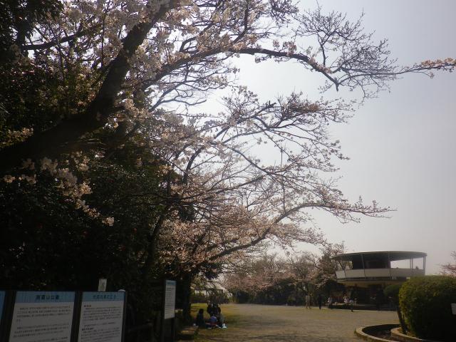 01)    18.03.27 逗子「披露山公園」の桜