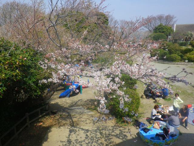 05)   18.03.27 逗子「披露山公園」の桜