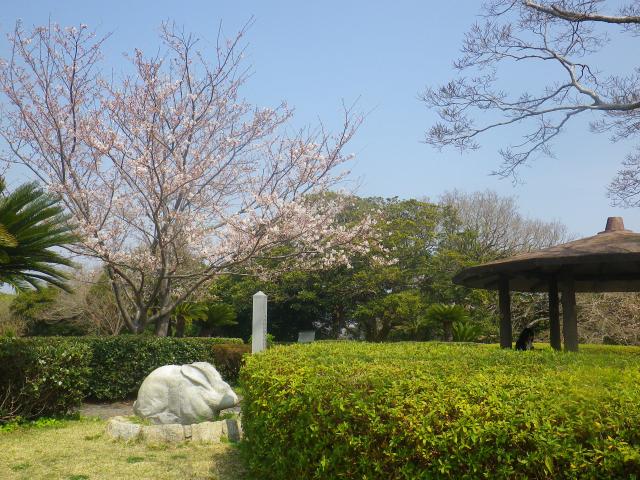 05)    18.03.27 逗子「大崎公園」の桜」」