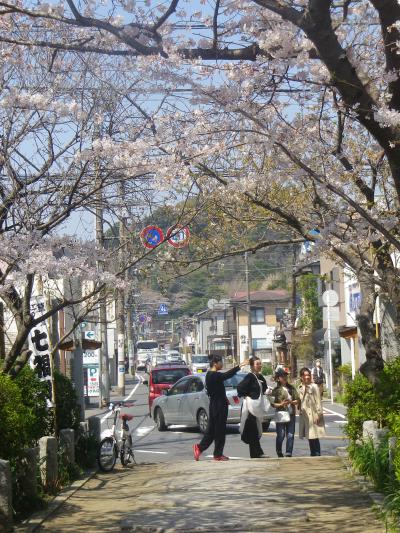 03)    18.03.28 鎌倉「宝戒寺」参道の桜