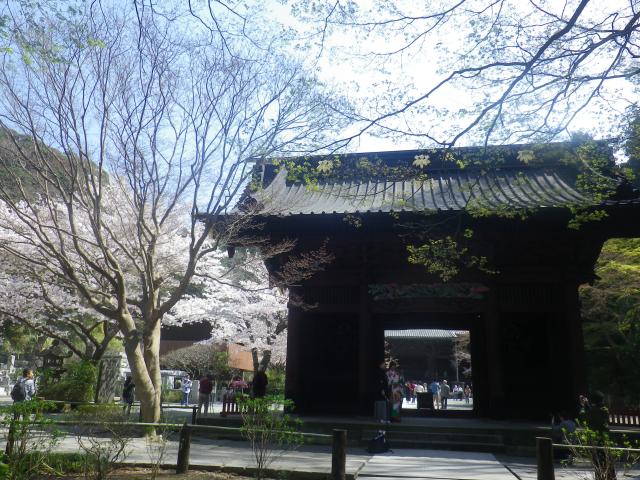 04)   18.03.28 鎌倉「妙本寺」の桜
