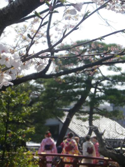 06)   18.03.28 鎌倉「鶴岡八幡宮」満開の桜