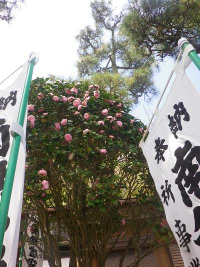 04-1)      18.03.30 鎌倉「星井寺」 ' 虚空蔵堂 ' 周辺の桜