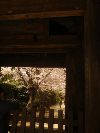 02)18.03.30 鎌倉「極楽寺」山門外から見た境内参道の桜