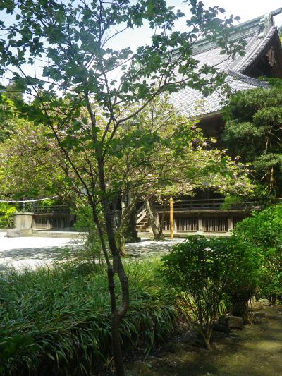 02-1)    18.04.13 鎌倉「妙本寺」満を持して! 御衣黄を観るだけの目的で寄ったら・・・ ・・・