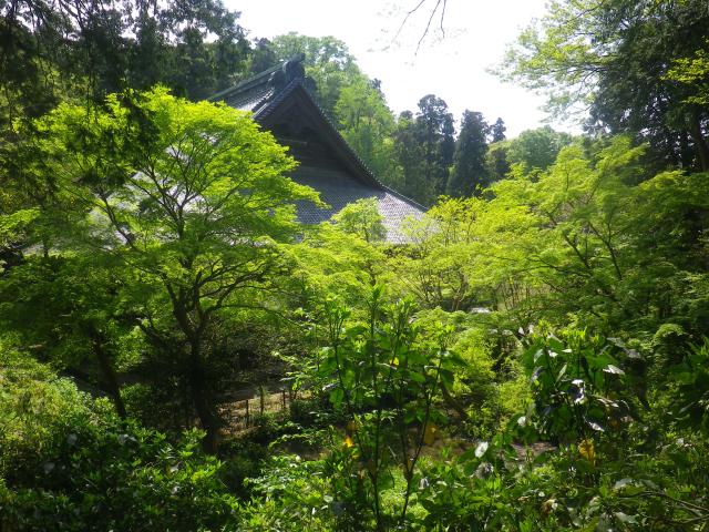 08-1)    18.04.13 鎌倉「妙本寺」満を持して! 御衣黄を観るだけの目的で寄ったら・・・ ・・・