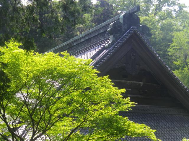 08-2)    18.04.13 鎌倉「妙本寺」満を持して! 御衣黄を観るだけの目的で寄ったら・・・ ・・・