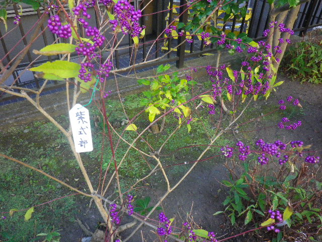 02-1) 14.11.14鎌倉「大巧寺」初冬の庭
