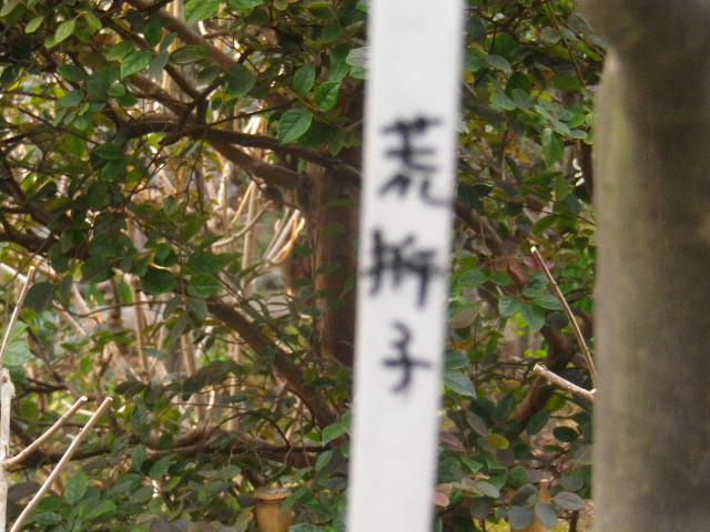 10-1) 読めないヨォ~ 辞書引くにも、真ん中の漢字は ' 扌+千+千? ' かぁ???