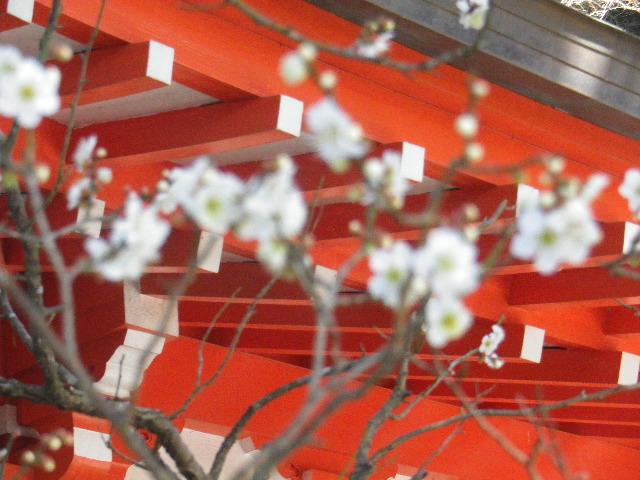 02-1-03) 社殿に向かって左の白梅。_  15.02.16 鎌倉「荏柄天神社」梅の頃