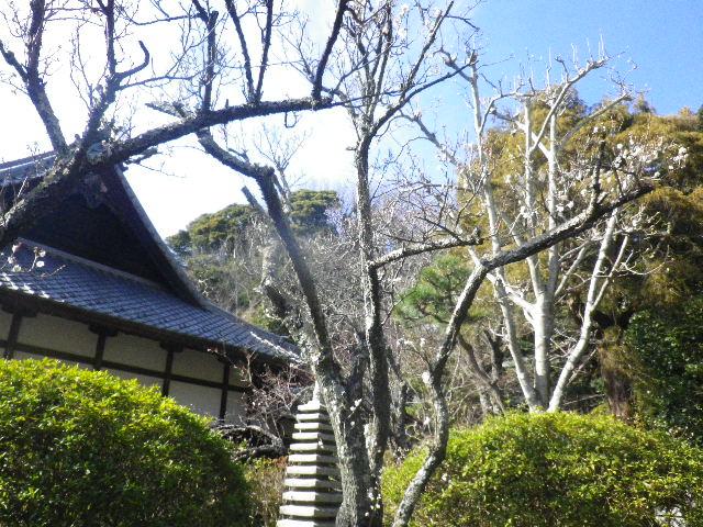 04-1) 背景は、客殿の屋根。