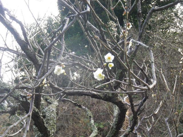 01-2-05) 15.02.21 早春の鎌倉「光則寺」