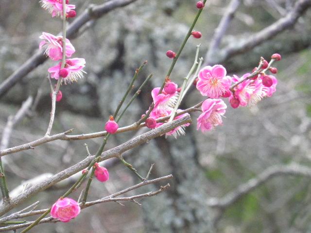 03-3) 15.02.21 早春の鎌倉「光則寺」