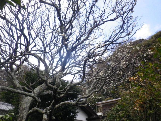 04-1)  15.02.21 早春の鎌倉「光則寺」