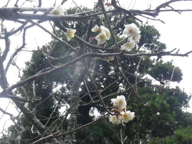 06-3) 15.02.21 早春の鎌倉「光則寺」